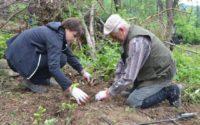 1000 drzew na minutę: akcja Nadleśnictwa Lutowiska