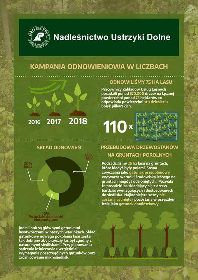 Kampania odnowieniowa w ustrzyckich lasach