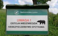 Uwaga: stałe bytowanie niedźwiedzi w Nadleśnictwie Lesko