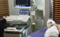 ultrasosnograf Lesko